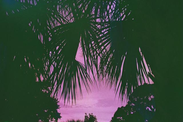 Wish You were Here- Ashley Medolia